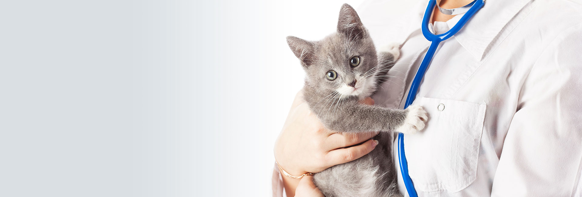 Veterinarian holding cat